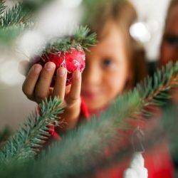 Lauern Zecken im Weihnachtsbaum?