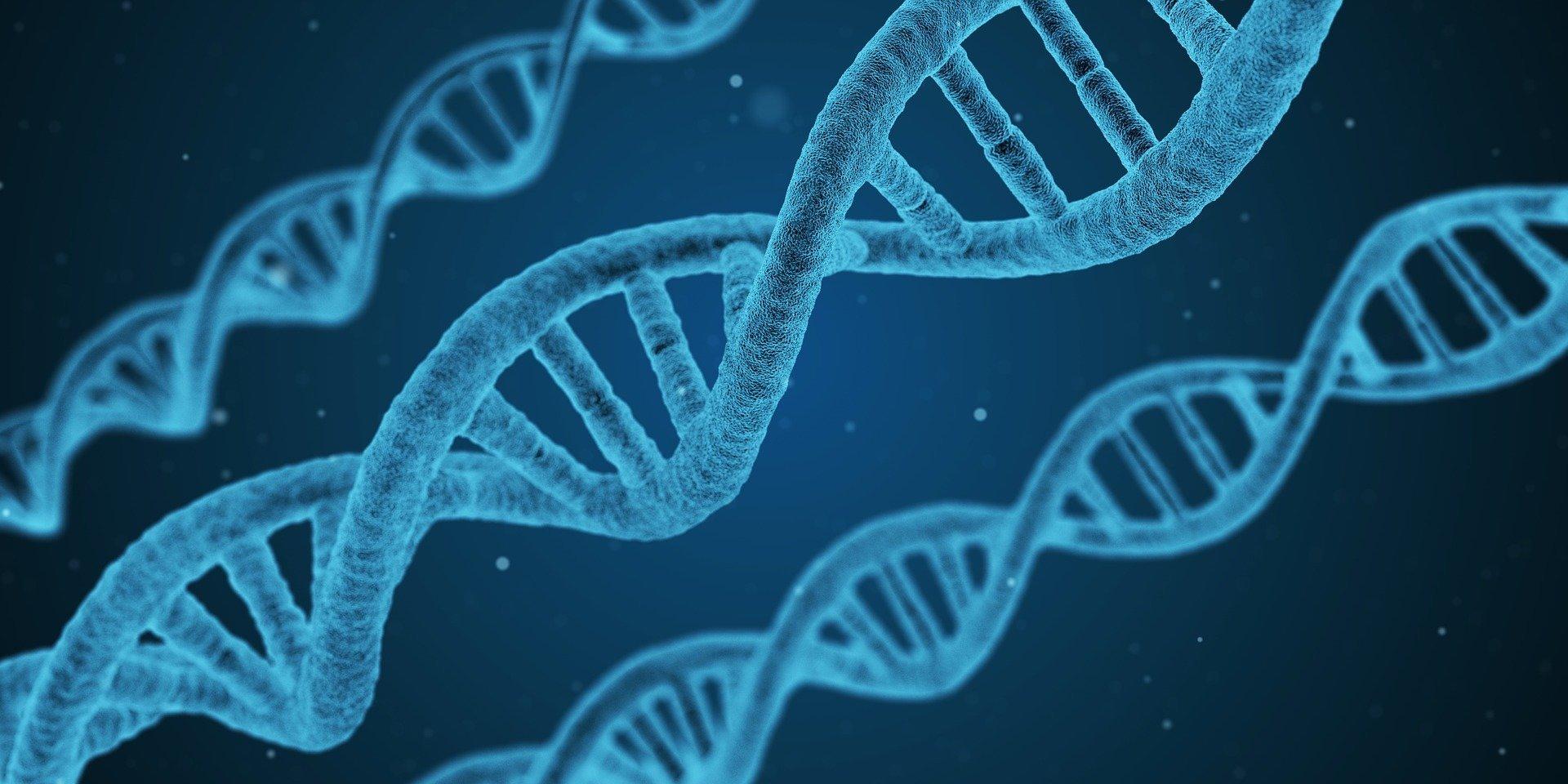 Neue genetische Einsicht könnte helfen, behandeln seltene, schwächende Herz-und Lungen-Zustand